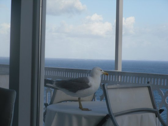 Hotel Mediterraneo Sorrento: We were amused by this friendly seagull.