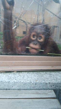 Maruyama Zoo: 目の前の♪