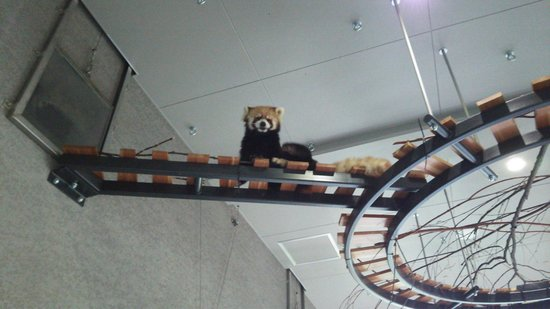 Maruyama Zoo: 見てる☆