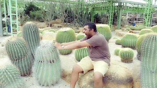 Nong Nooch Tropical Botanical Garden: Cactus joing