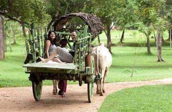 Amaya Lake: Cart Rides Around The Lake