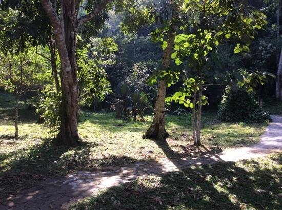 Shimiyacu Amazon Lodge: morning light