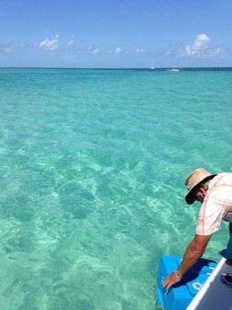 Easy Day Charters : Beautiful water on the sandbar