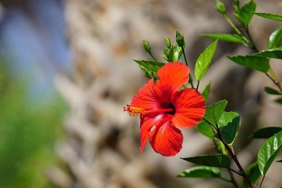 Aldemar Royal Mare Thalasso Resort : Flower