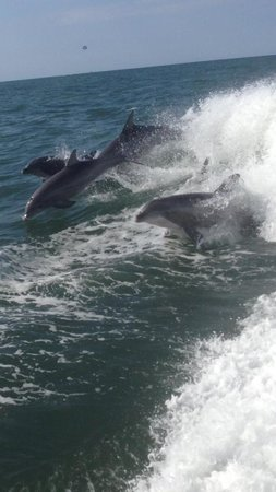 Thundercat Dolphin Watch: Can't get much better than that!
