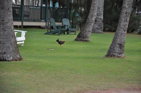 Hotel Coral Reef: Kauai aka Chicken Island