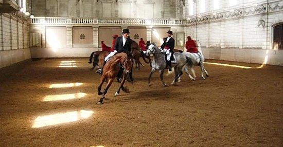 Levend Paardenmuseum De Hollandsche Manege: Vondelcarrousel in full swing