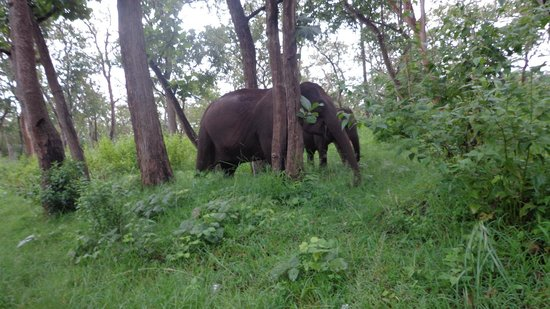 Jungle Trailz: Female Elephant with its calf