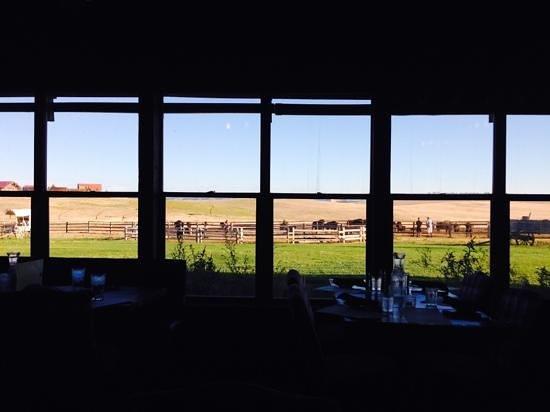 Zion Mountain Ranch : Blick aus dem Restaurant zur Büffelherde