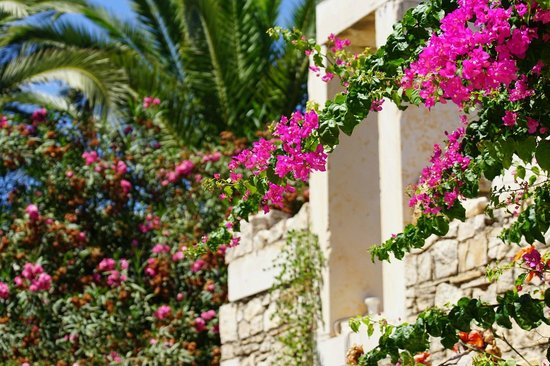 Aldemar Royal Mare Thalasso Resort : You'll find flowers