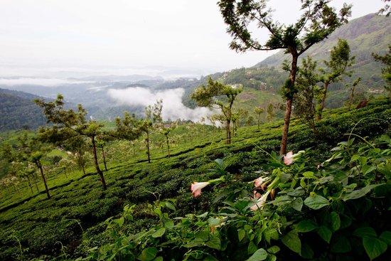 Tea Valley Resort - View 1 (GhummakkadYaatri)