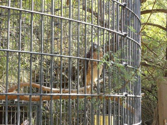 Living Desert Zoo & Gardens : Bird enclosure