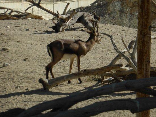 Living Desert Zoo & Gardens : Animal enclosure