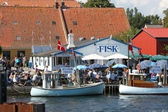 Ditlevsens Fiskehus: ditlevsens fiskehus