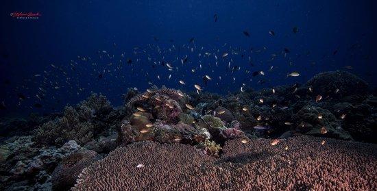 Padre Burgos Castle Resort: underwater