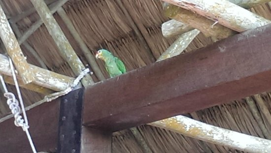 Mountain Equestrian Trails: Baby parrot living in the cantina
