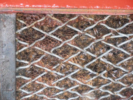 Quince Honey Farm: Working away.