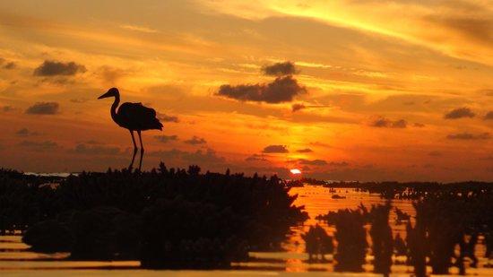 Vilamendhoo Island Resort & Spa: Sunrise at low tide