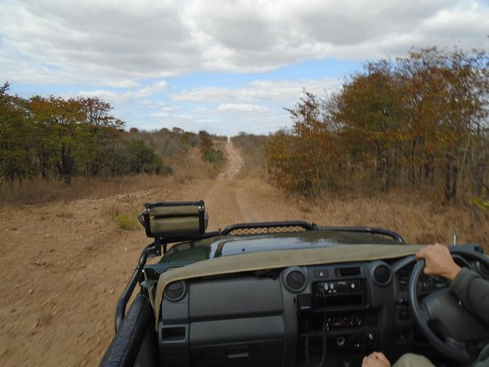 andBeyond Ngala Tented Camp : afternoon game drive