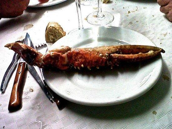 RESTAURANTE MARUCHO: Una pinza de bogavante!!! En plato trinchero.