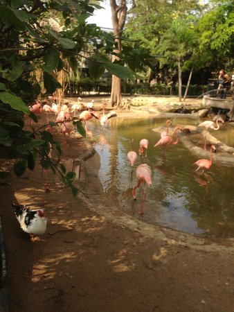 Zoo of the city of Barranquilla: Flamingos