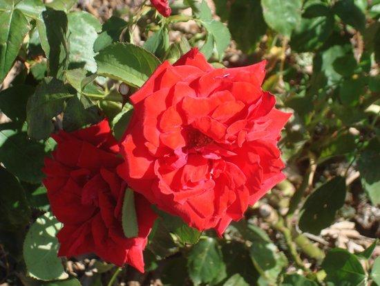 Jardim das rosas  Foto di Parco del Ritiro (Parque del Retiro