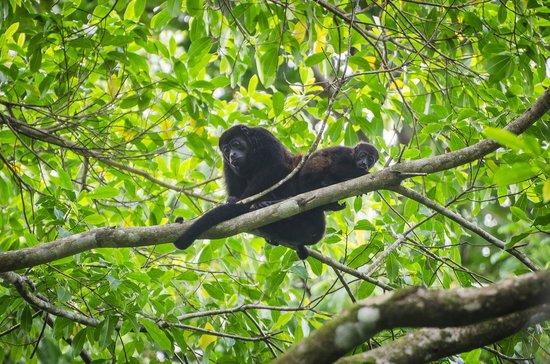 LagunaVista Villas: Monkeys from park hike