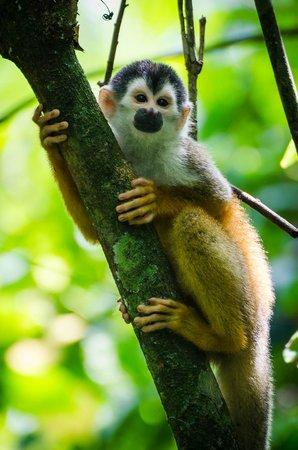 LagunaVista Villas: Monkey from park hike