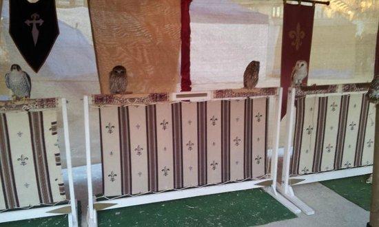 Plaza Mayor de Chinchón: Aves rapaces
