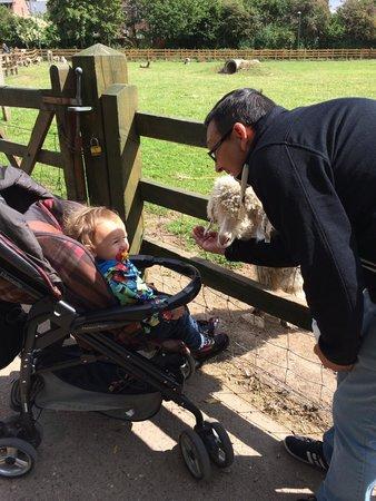 Stonebridge City Farm: Luca and his Daddy feeding the sheep.