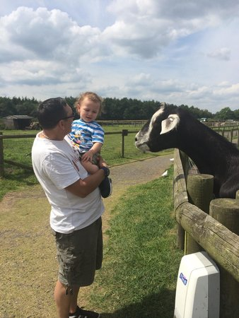 Matlock Farm Park: Meeting the animals