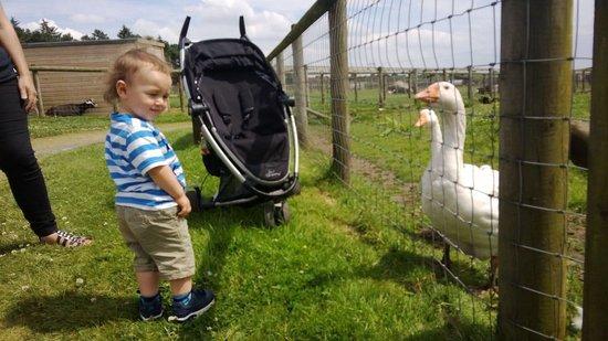 Matlock Farm Park: Meeting the ducks
