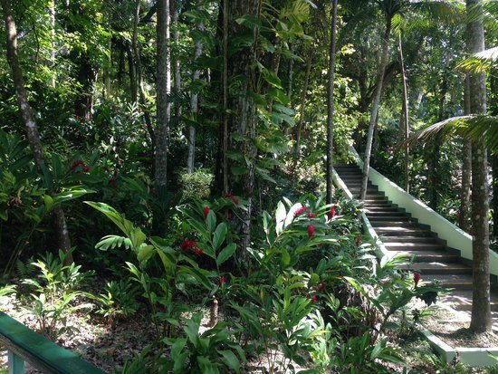 Dunn's River Falls and Park: Stairs up instead of going through the water