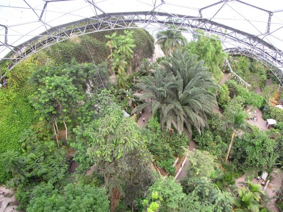Eden Project: view from the top