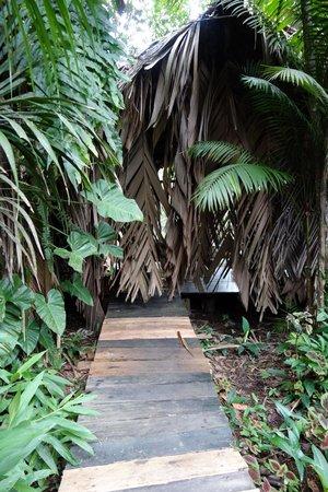 Orinoco Eco Camp: chambre - exterieur