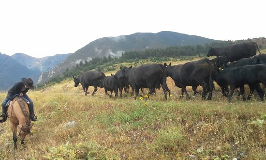 63 Ranch: Cattle drive