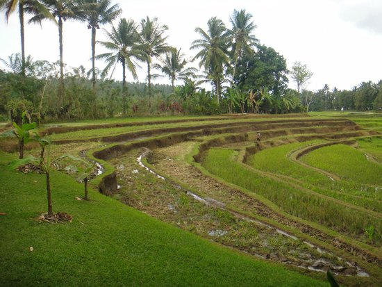 Bali Eco Stay Bungalows: View from verandah Harvest Bungalow