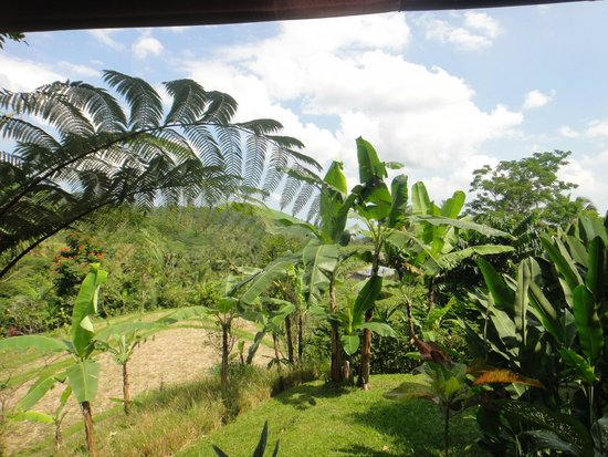 Bali Eco Stay Bungalows: Gorgeous views