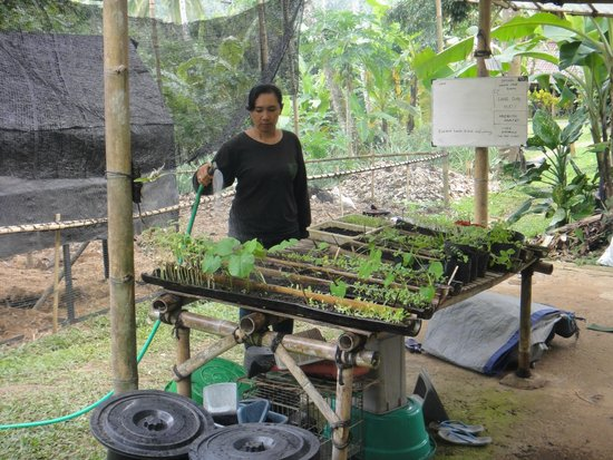 Bali Eco Stay Rice Water Bungalows: Vegetable and Fruit garden