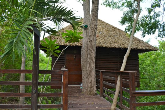 Buena Vista Surf Club: Our tree house