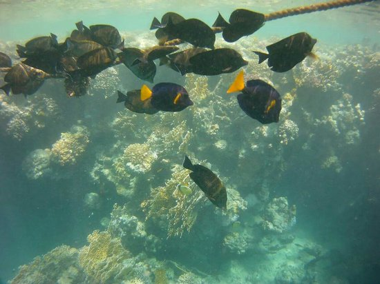 Jaz Dar El Madina: Vista pesci