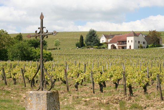 Chabris, Frankrike: The vineyards of Sancerre
