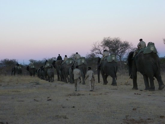 Camp Jabulani : An elephant farewell from Jabulani
