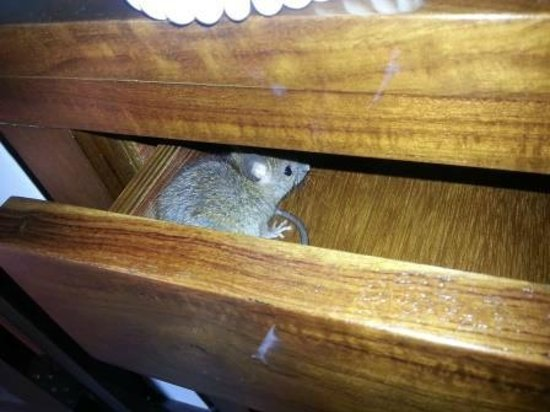 Jetwing Lagoon: There was a Rat in the drawer of the dressing table
