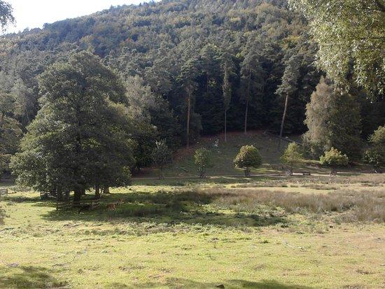 Kurpfalz-Park : Rehe