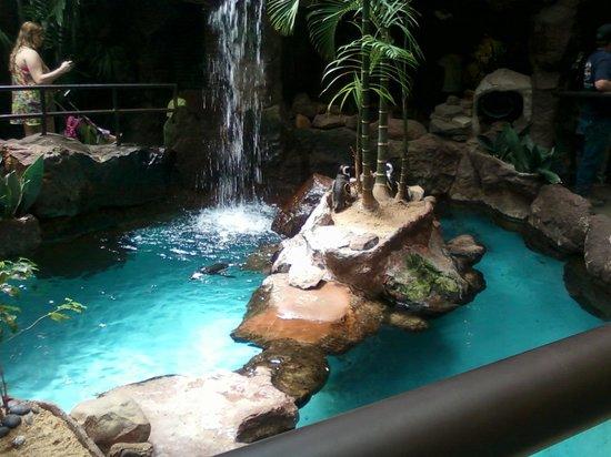 Dallas World Aquarium: They are so cute