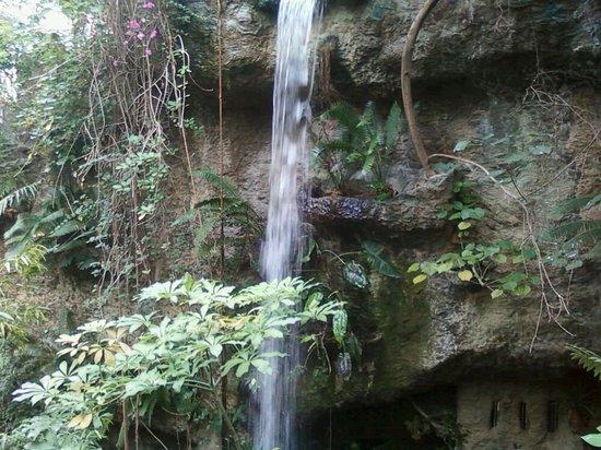 Dallas World Aquarium: Pretty waterfall at the aquarium