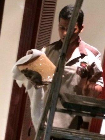 Anse Kerlan, Seszele: Ratte auf dem Zimmer