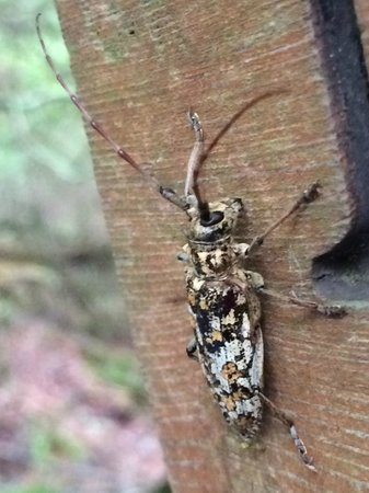 Miners Falls: Interesting Insect at Marker #10 Pictured Rocks NLS August 2014 IMG_7138