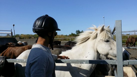 Islenski Hesturinn, The Icelandic Horse - Riding Tours: enjoyed it